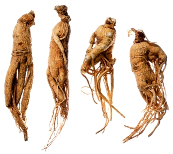 ginseng for fatigue